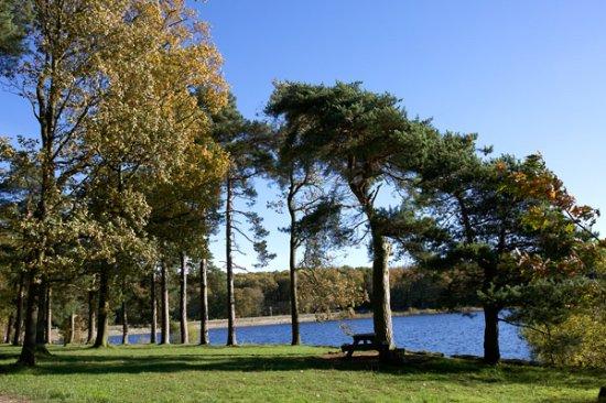 Blubberhouses, UK: Picnic area at Swinsty Reservoir  Autumn 2017