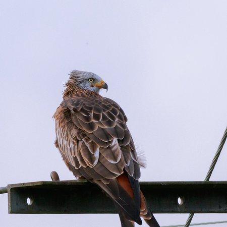 Doune, UK: Argaty Red Kites