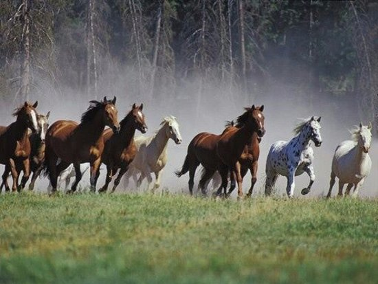 Quincy, Californië: Greenhorn Ranch's Running of the Horses