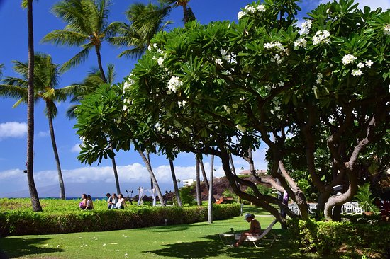 Hotel Grounds Fronting Ocean Walkway And Beach Picture Of