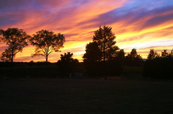 Barboursville, VA: A wind swept sunset in Virginia above Five Oaks