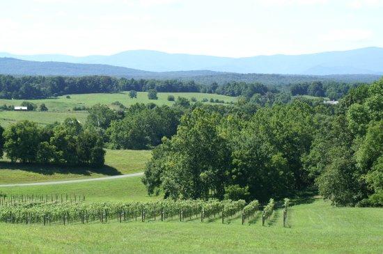 Barboursville, VA: Fabulous views of the Blue Ridge Mountains