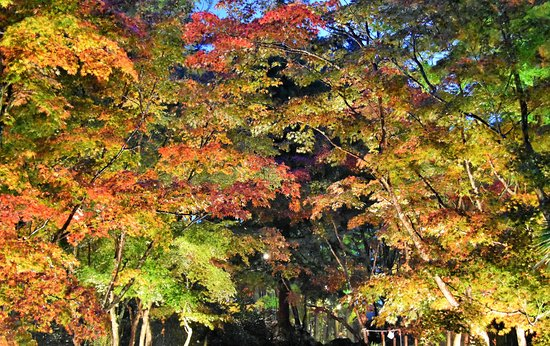 Kashiwazaki ภาพถ่าย