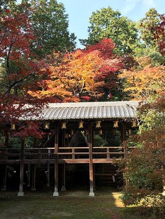 長岡京市, 京都府, 11月15日に紅葉🍁を見に行きました。一部見頃になっていますがまだ青葉もあり、月末には綺麗に紅葉しそうです。