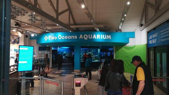Two Oceans Aquarium: IMG_20171114_144646_large.jpg