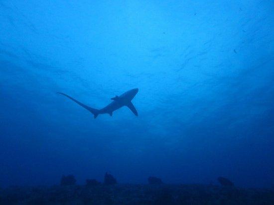 Malapascua Island, Philippines: photo2.jpg