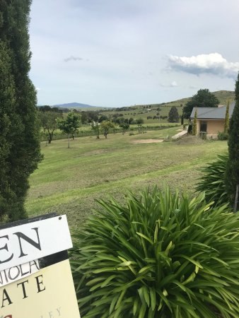 Dixons Creek, Avustralya: Great view over the vineyards and olive grove
