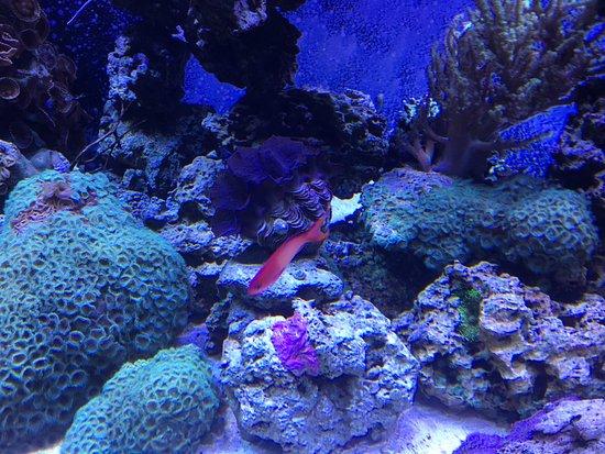 Mystic Aquarium Ct Updated 2017 Top Tips Before You Go
