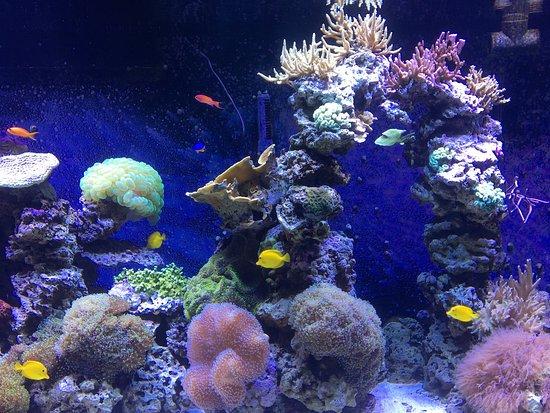 Rhode Island Aquarium Hours