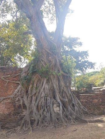 Ayutthaya Ruins : 20171109_120616_large.jpg