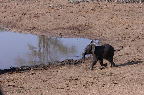 Balule Nature Reserve, Sudáfrica: photo1.jpg