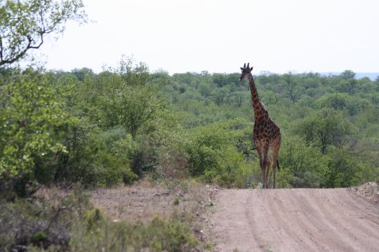 Balule Nature Reserve, Sudáfrica: photo2.jpg