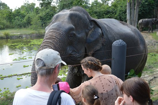 Tha Yang, Thailand: up close and personal with the elephants