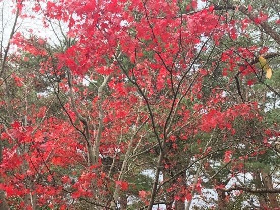 Matsumae-cho, Japón: photo3.jpg