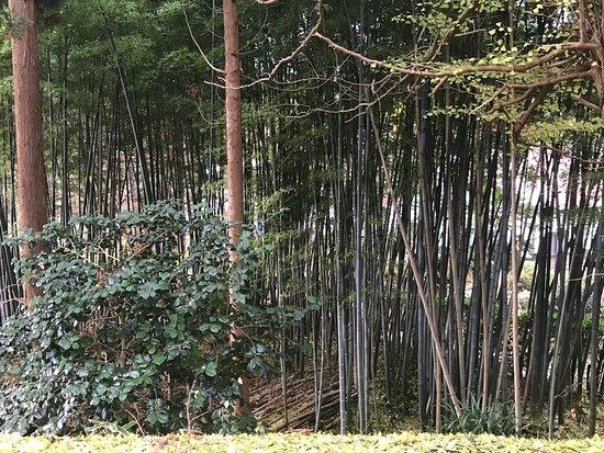 Matsumae-cho, Japón: photo6.jpg