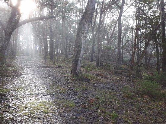 Halls Gap, Australien: Forest at lookout