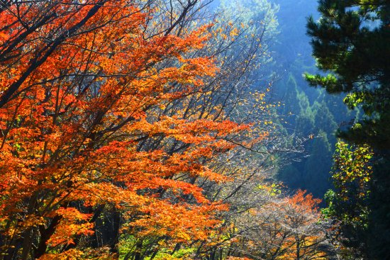 Ebino, Japan: 秋深まるえびの高原・2(2017年11月)