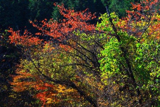 Ebino, Japan: 秋深まるえびの高原・3(2017年11月)