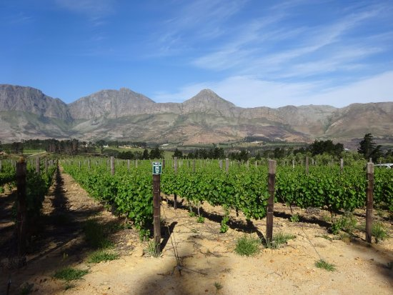 Sir Lowry's Pass, South Africa: THe Skaap wine yard