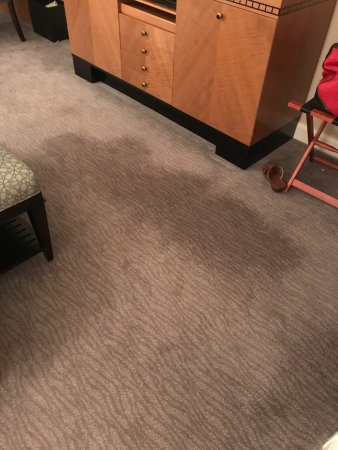Cary, NC: Dirty and worn carpet
