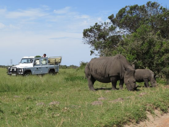 Port Elizabeth, South Africa: Guided Game Drives