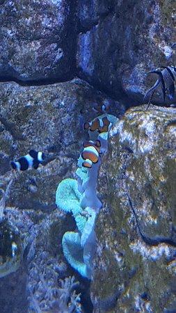 Malta National Aquarium: 20170618_125130_large.jpg
