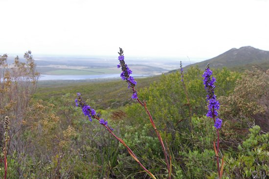 Overberg District, Sydafrika: View on the Fynbos Trail