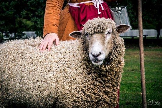 Colonial Williamsburg : Several animals and caregivers to visit with