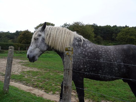 Moutiers au Perche, France : Percheron