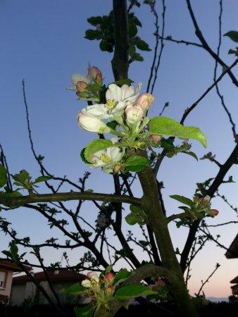 Laguardia, Spain: Floración en primavera
