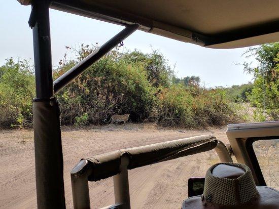 Chobe Game Lodge : Actividades de safari