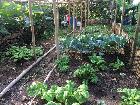 Turuk, India: Garden with vegetable