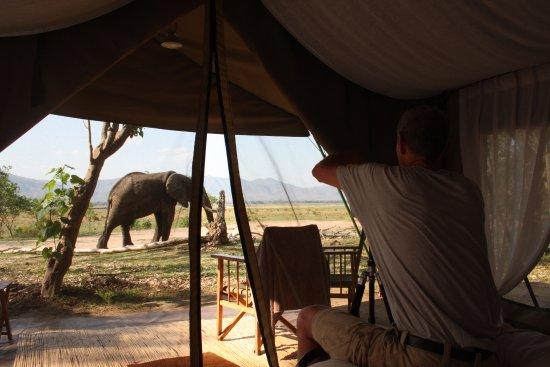 Mana Pools National Park, Zimbabwe: Ellies enjoying fallen branches near our tent