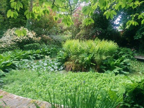 Helensburgh, UK: Pond growth
