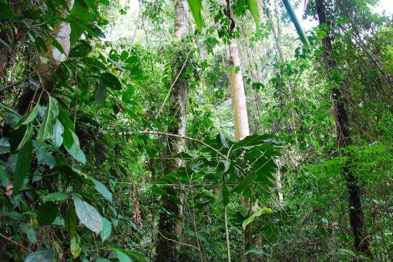 Sumatra Paradise Day Tours: Przyroda