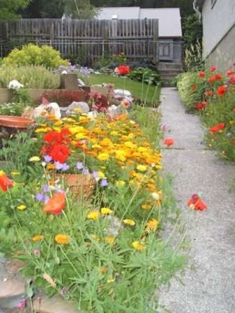 Mt. Burgess Guesthouse: Alpine flowers along the garden path