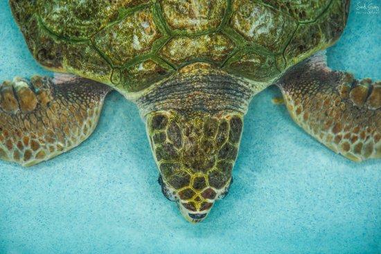 Navarre Beach Sea Turtle Conservation Center Navarre Fl