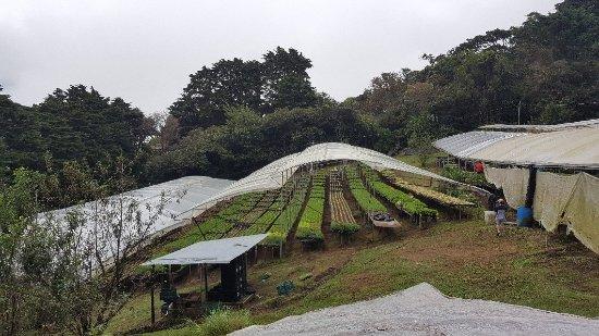 Cerro Plano, Costa Rica: Increible, un lugar super tranquilo cada cabina amueblada y equipada con la cocina. Super recome