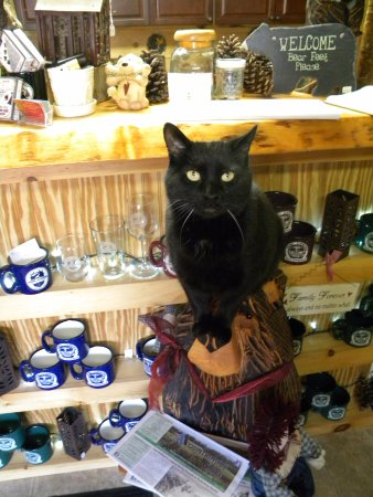 Pemi Cabins : Our front desk greeter, also is in our small gift shop with mugs, t-shits and lots of other good