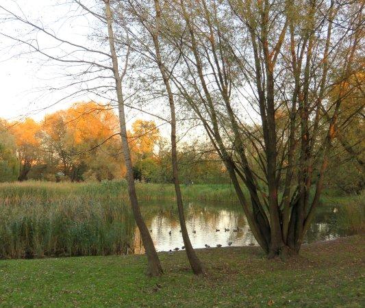 Park Jana Pawła II - Łęgi Dębińskie