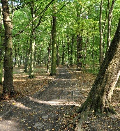 Stefan Żeromski Park
