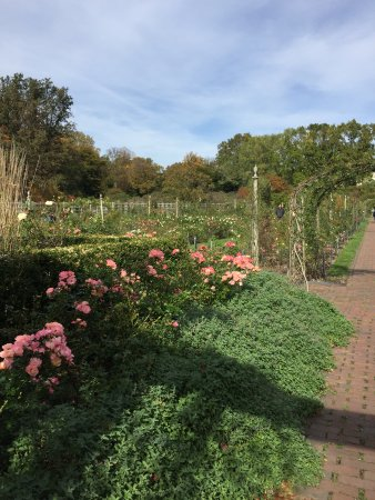 Brooklyn Botanic Garden Ny Top Tips Info To Know Before You Go With Photos Tripadvisor