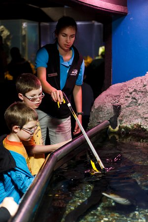 Sea Life Kelly Tarlton's Aquarium: Catch one of the daily amazing talks and feeds!