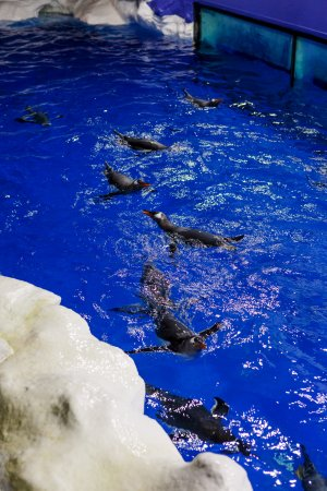 SEA LIFE Kelly Tarlton's: Check out the Gentoo penguins!