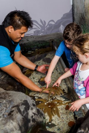 Sea Life Kelly Tarlton's Aquarium: Discover the incredible 11 arm Sea Stars!
