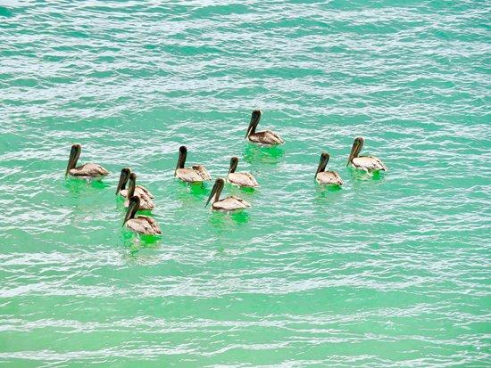 Castara, Tobago: Just a few more piccies of the birds & the fishermen