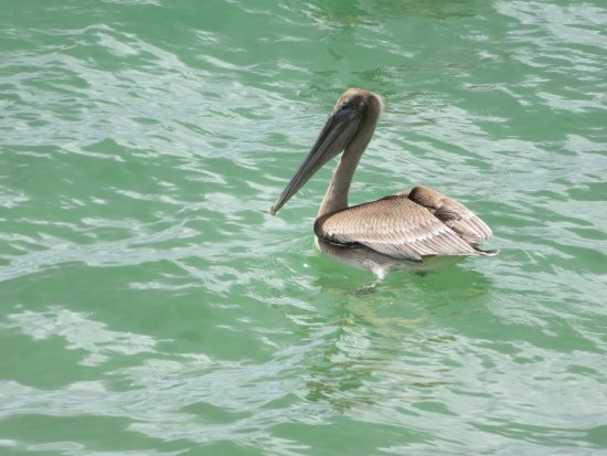 Castara, Tobago: Just a few more piccies of the birds & the fishermen