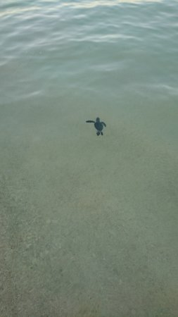 PavoReal Beach Resort Tulum Photo