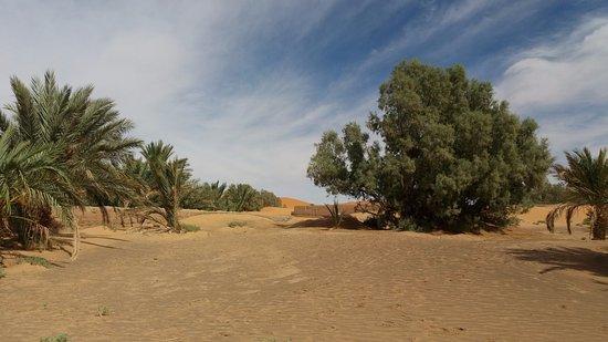 Riad Aicha: Cerca del Riad se encuentra el Oasis y se puede ir caminando.