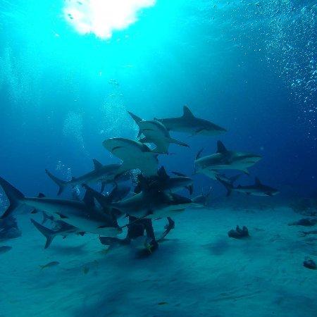 New Providence Island: Stuart Cove's Dive Bahamas